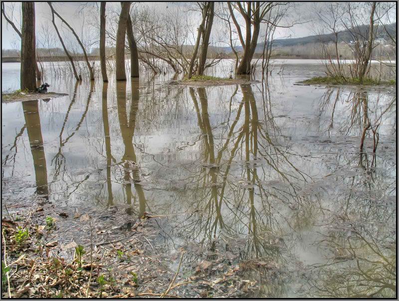 """фото """"Середина апреля..."""" метки: пейзаж, весна"""