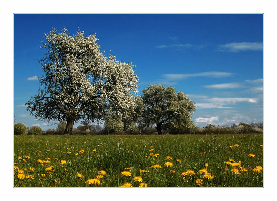 "photo ""Field"" tags: landscape, spring"