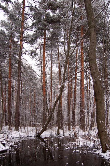 """фото """"Тишина"""" метки: пейзаж, весна, лес"""