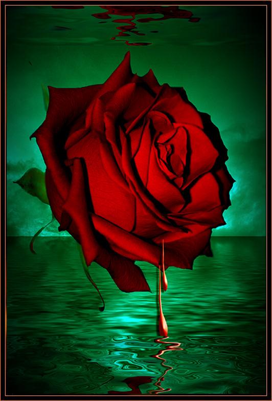 """фото """"L'important c'est la Rose"""" метки: фотомонтаж,"""