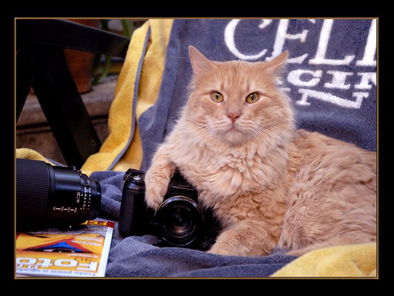 "photo ""PHOTOGRAPHER"" tags: nature, wild animals"