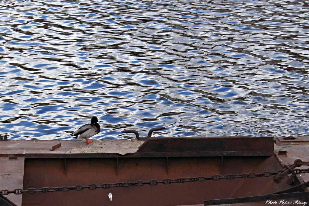 """фото """"На Москве-реке"""" метки: природа, портрет,"""