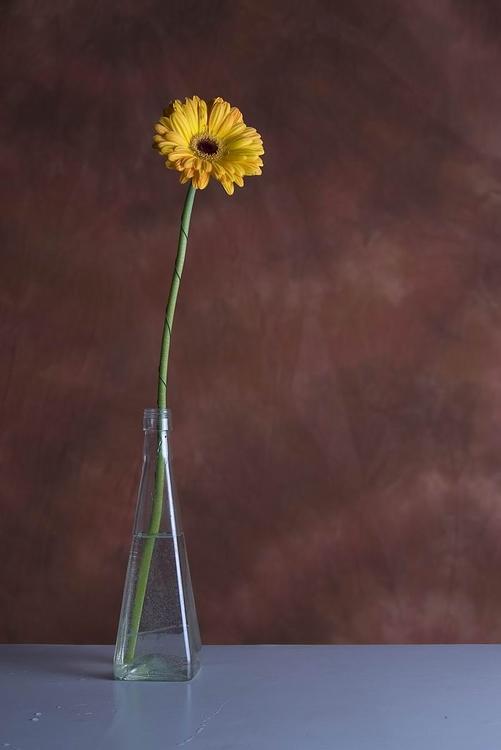 """photo """"A Simple Still Life"""" tags: still life,"""