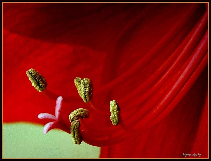 """photo """"red"""" tags: nature, macro and close-up, flowers"""