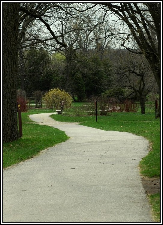 """photo """"Pathway to Spring"""" tags: landscape, spring"""