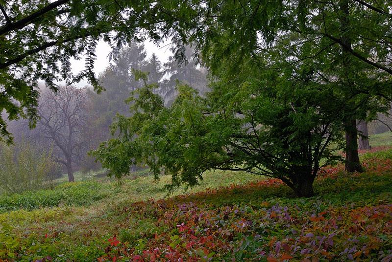 """фото """"Осенне-ботаническая"""" метки: пейзаж, осень"""
