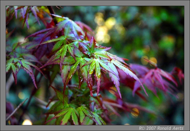 """фото """"Young tree"""" метки: природа, макро и крупный план, цветы"""
