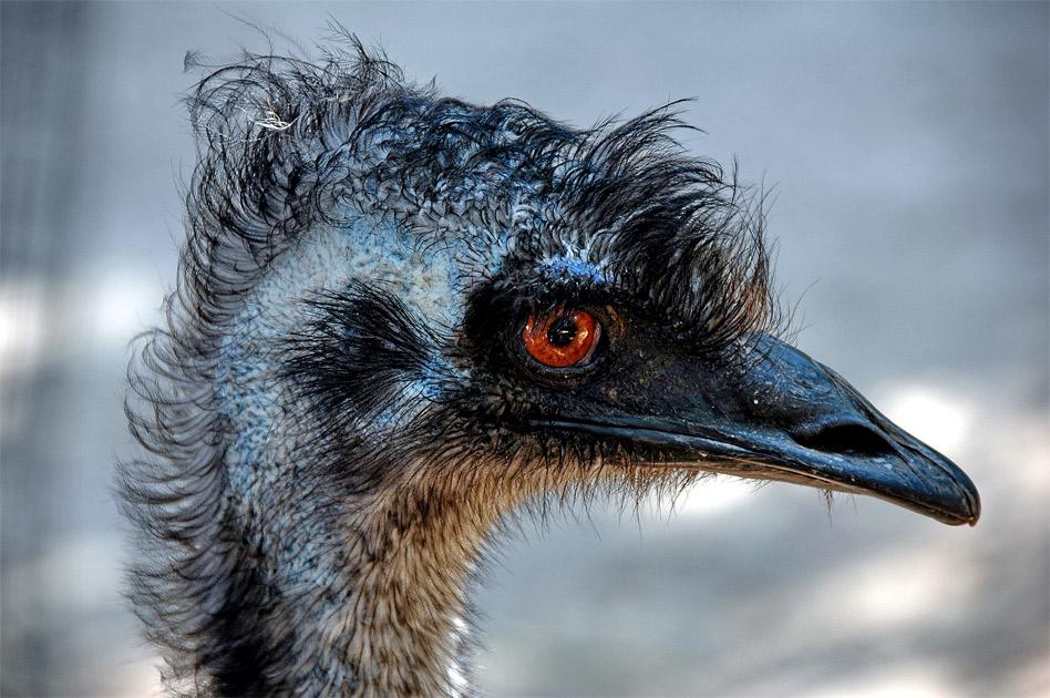 """фото """"Синяя птица"""" метки: природа, путешествия, дикие животные"""