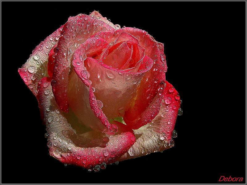 """фото """")))))"""" метки: природа, цветы"""