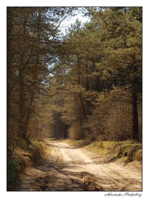 """фото """"Лес"""" метки: пейзаж, лес"""
