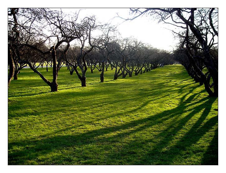 "фото ""Spring garden"" метки: пейзаж, весна, лес"