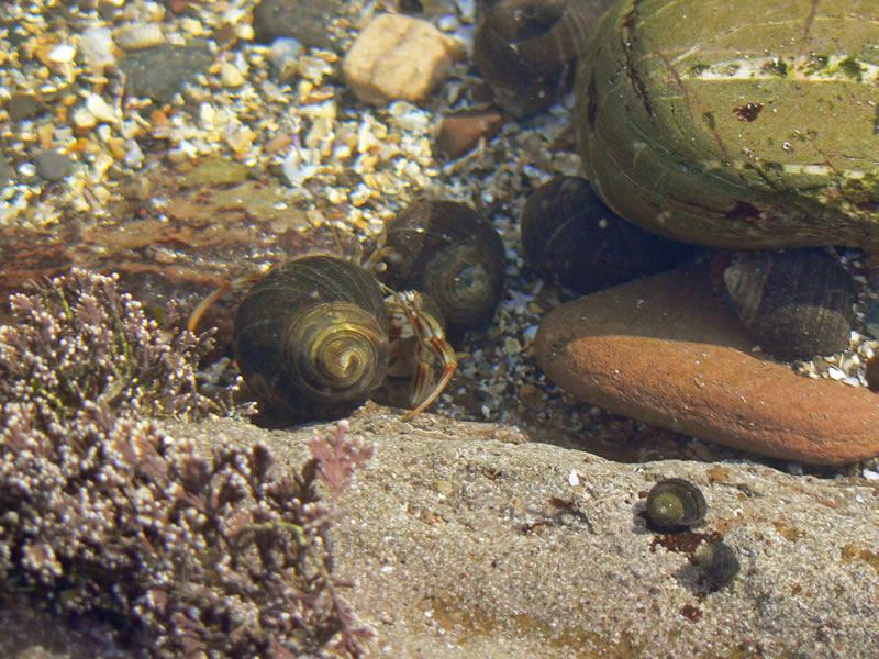 """фото """"Hermit Crab"""" метки: макро и крупный план, разное,"""
