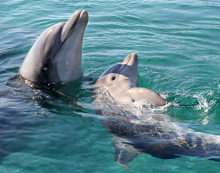 "photo ""05793.b Baby dolphin with mam"" tags: nature, wild animals"