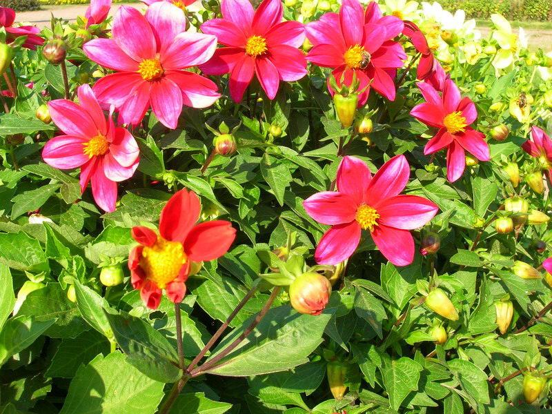 """фото """"Цветы в Кусково"""" метки: природа, цветы"""