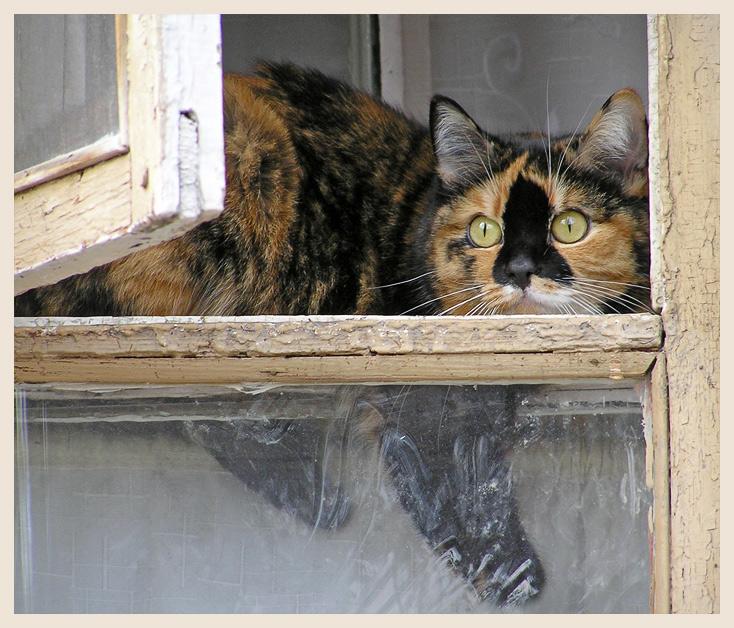 "photo ""Waiting"" tags: nature, pets/farm animals"