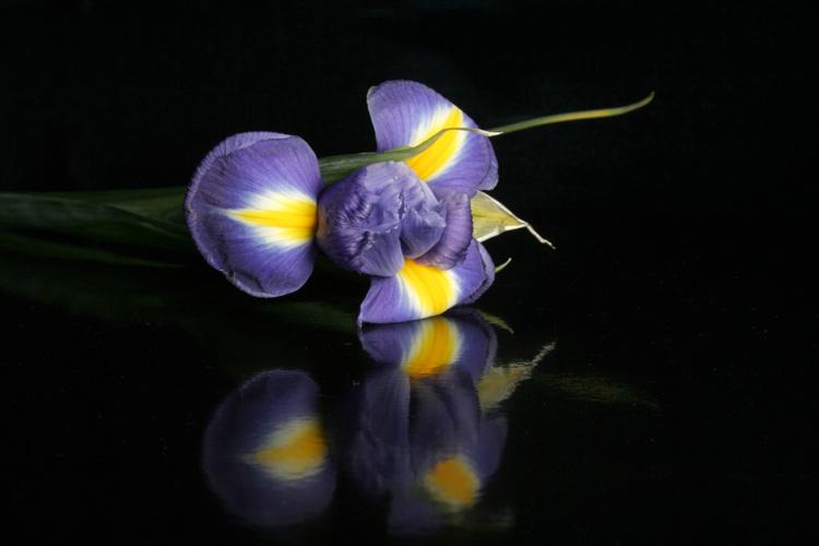"""фото """"Ирис"""" метки: природа, цветы"""