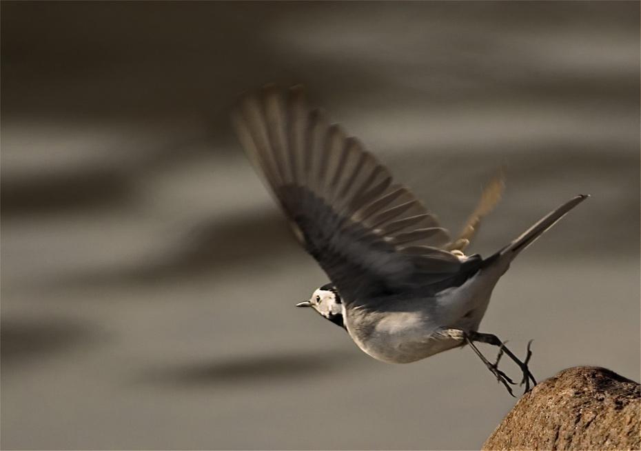 """фото """"Higher"""" метки: природа, дикие животные"""