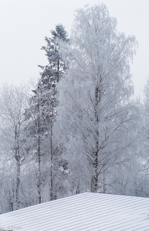 """photo """"За окном... By window"""" tags: landscape, forest, winter"""