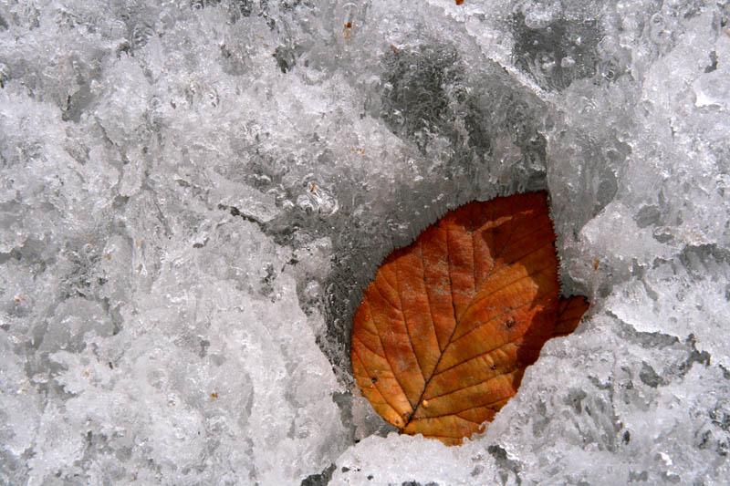 """фото """"Глобальное потепление"""" метки: природа,"""