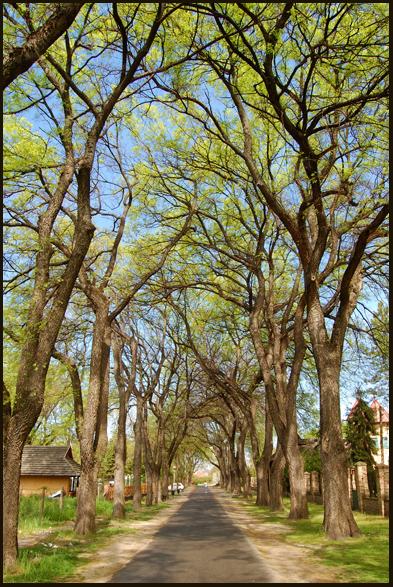 """фото """"Roots in the sky"""" метки: пейзаж, весна, лес"""