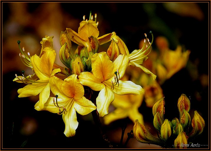 """photo """"for a new friend Mireille"""" tags: nature, macro and close-up, flowers"""