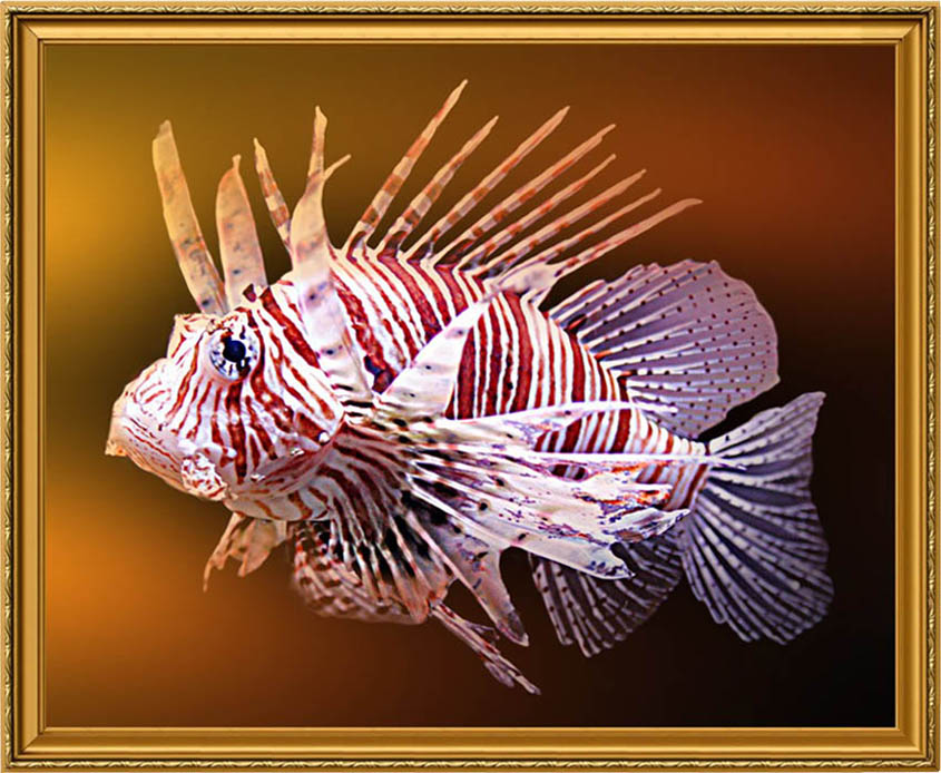 """photo """"Fish"""" tags: underwater, montage,"""