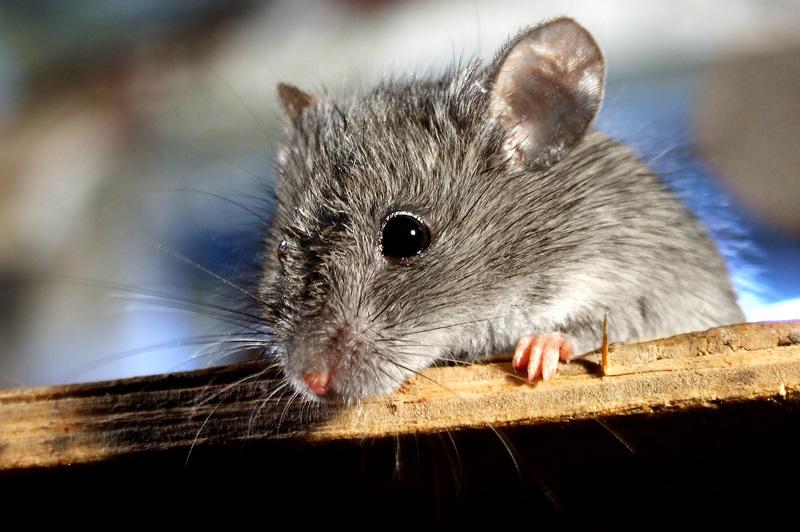 Серенькие мишки картинки