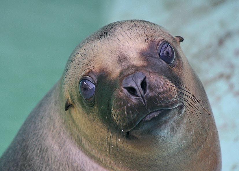 """фото """"Морская принцесса"""" метки: природа, дикие животные"""