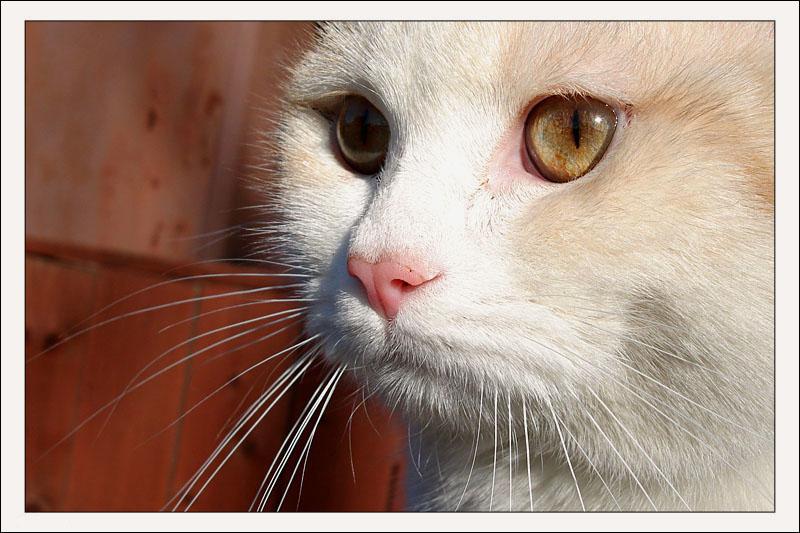 "photo ""Peach."" tags: nature, pets/farm animals"