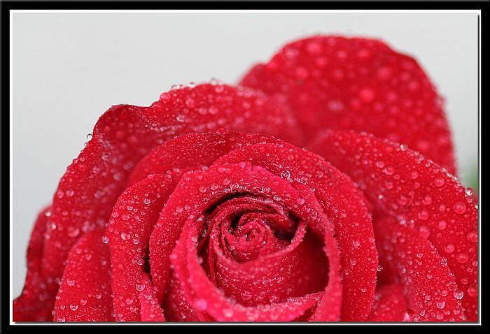 """фото """"April Showers"""" метки: природа, цветы"""