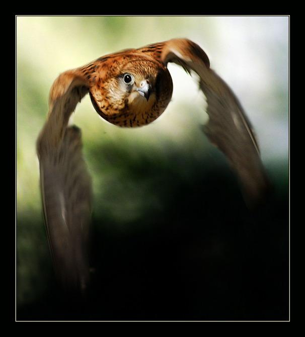 """фото """"Разведка боем"""" метки: природа, дикие животные"""