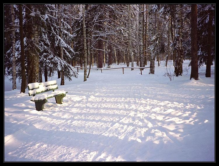 """фото """"Lines 3"""" метки: пейзаж, зима, лес"""