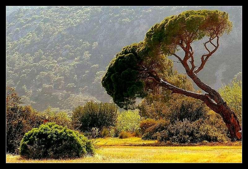 "фото ""Nature"" метки: природа, цветы"