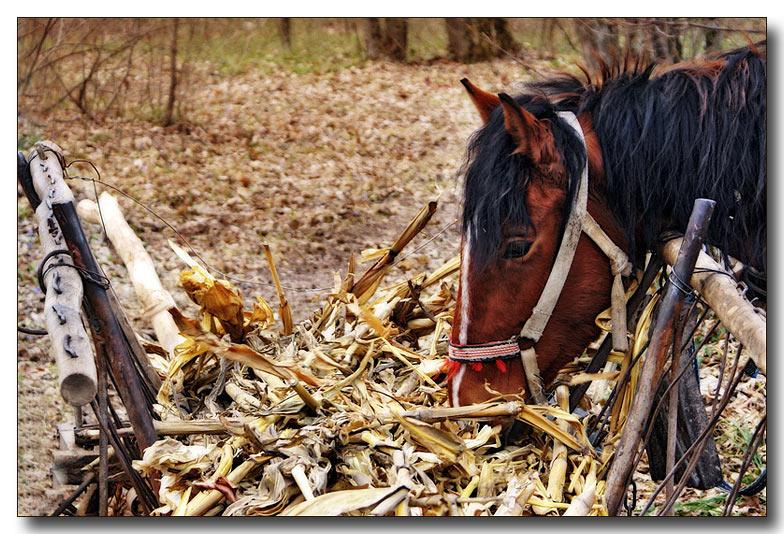 """фото """"О грустном..."""" метки: природа, домашние животные"""