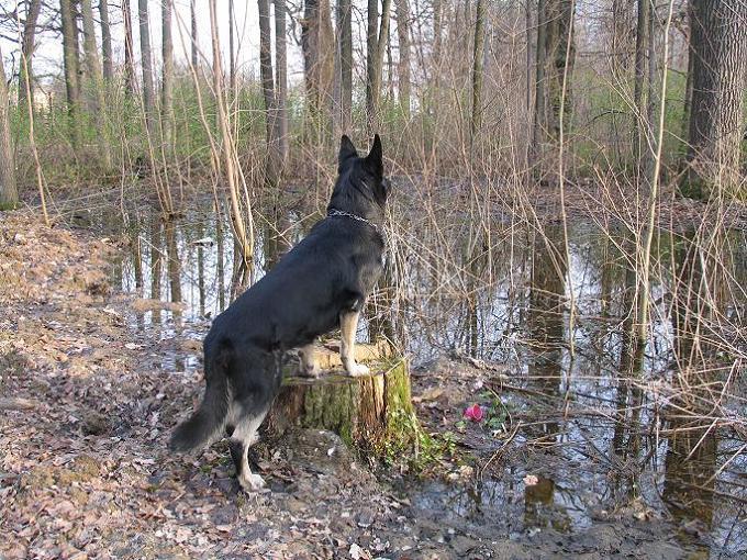 """фото """"Кто-то есть на той стороне!"""" метки: природа, домашние животные"""