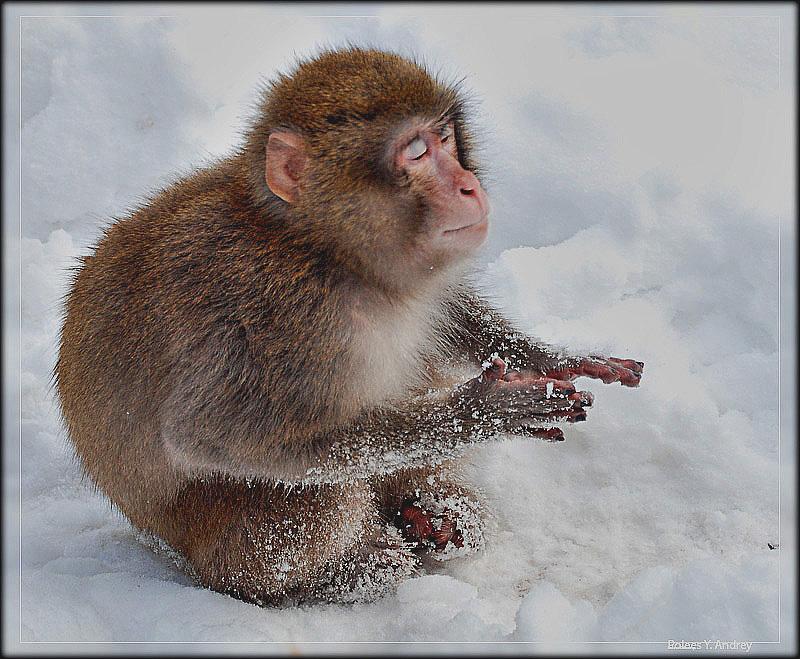 "photo ""***"" tags: nature, humor, wild animals"