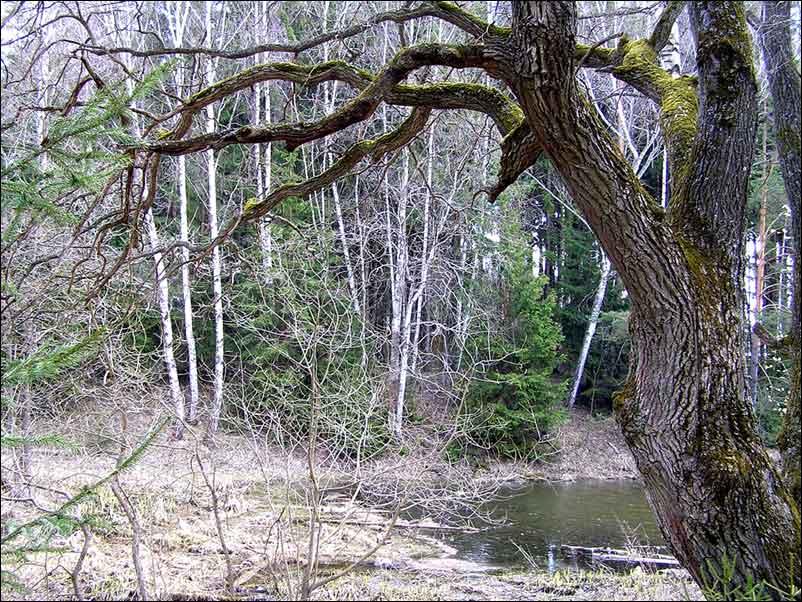 """фото """"В весеннем лесу."""" метки: природа,"""