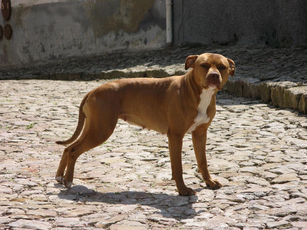 "photo ""My dog"" tags: nature, pets/farm animals"