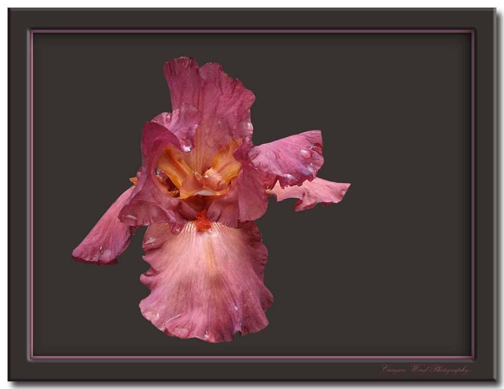 "фото ""The Princess !"" метки: природа, путешествия, Северная Америка, цветы"