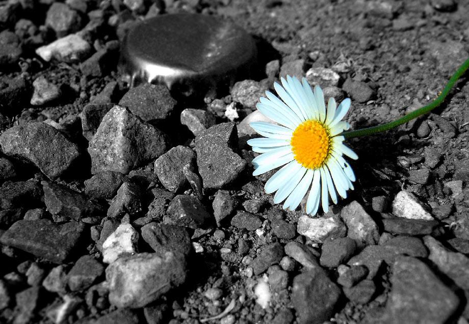"photo ""SW Colour"" tags: nature, flowers"