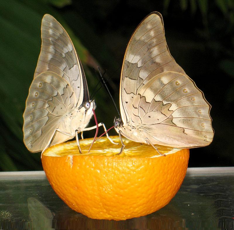 """фото """"Ужин"""" метки: природа, макро и крупный план, насекомое"""