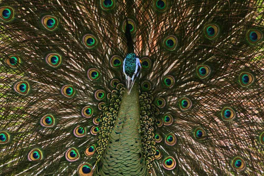 "photo ""Birds"" tags: nature, wild animals"