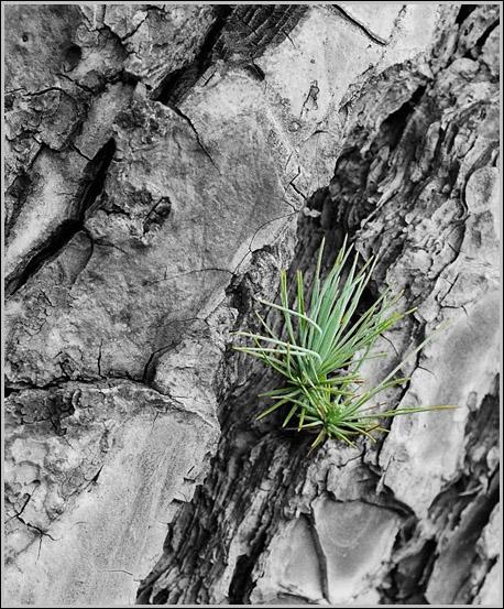 """фото """"Выживание."""" метки: черно-белые, природа, цветы"""