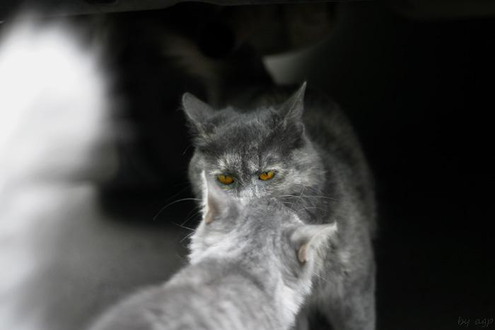 """фото """"Глаза..."""" метки: природа, разное, домашние животные"""