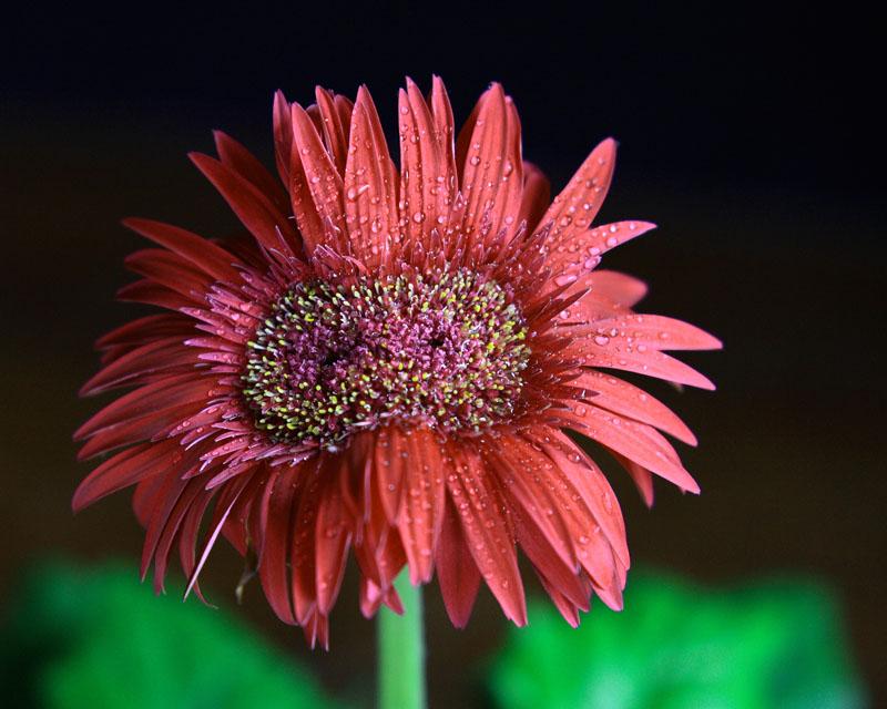 "фото ""twin flower"" метки: природа, цветы"