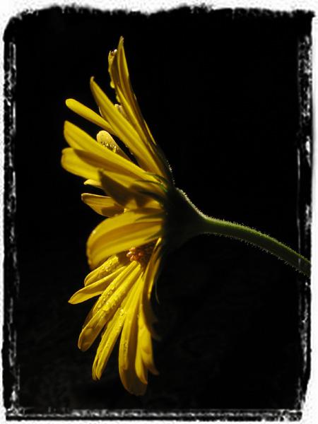 """фото """"Вертикаль"""" метки: природа, цветы"""