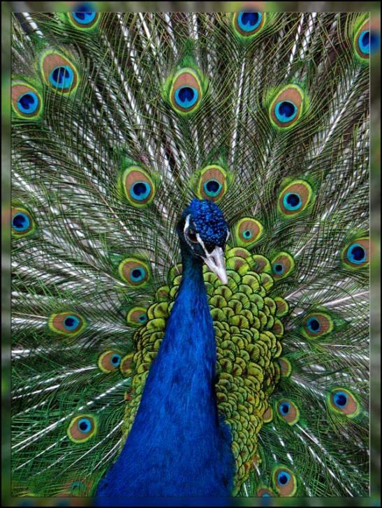 """фото """"живой фейерверк"""" метки: природа, дикие животные"""