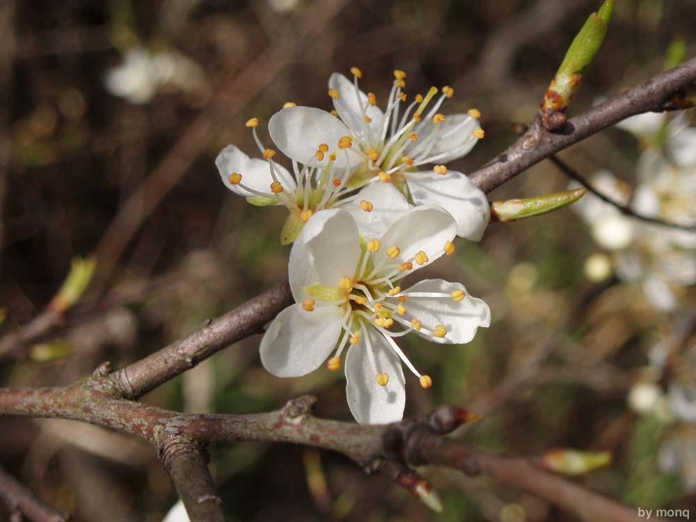 """фото """"flower"""" метки: природа, цветы"""