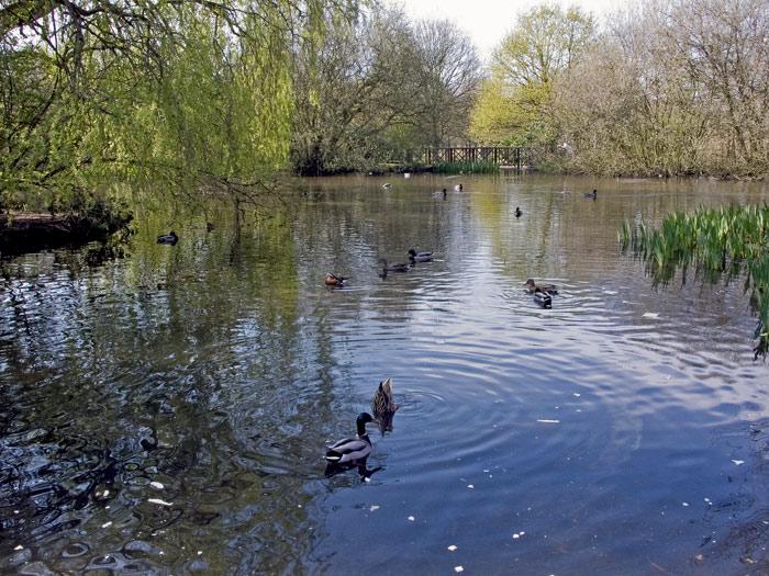 """фото """"Pond in the park"""" метки: природа,"""