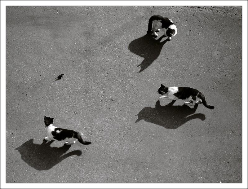 """фото """"Идет охота..."""" метки: жанр, природа, домашние животные"""